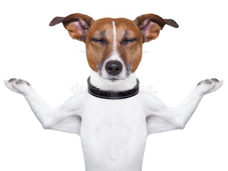 Cane Meditating fotografia stock libera da diritti