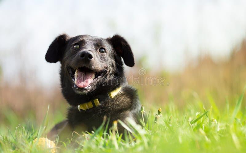 Cane misto adottato felice della razza immagine stock libera da diritti
