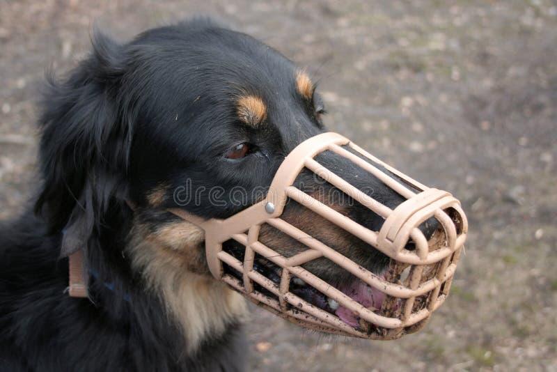 Cane in museruola fotografia stock