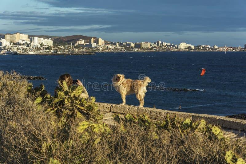 Cane nei raggi della regolazione contro lo sfondo del mare immagine stock