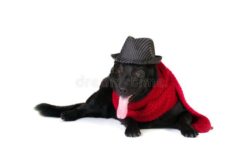 Cane nel cappello e nel silenziatore di modo immagini stock libere da diritti
