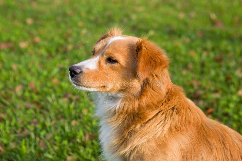 Cane nel giardino fotografie stock