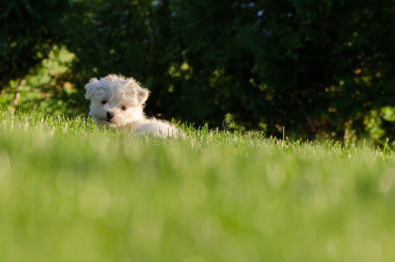 Cane nell'erba immagini stock libere da diritti