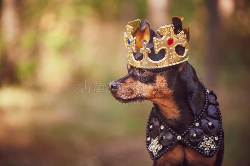 Cane nella corona, in vestiti reali, su uno sfondo naturale Cane fotografia stock libera da diritti