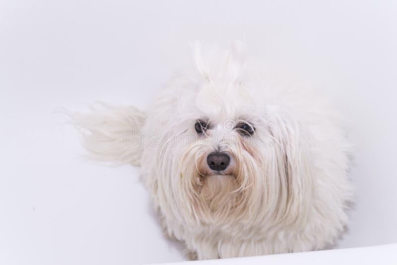 Download Cane nella doccia fotografia stock. Immagine di testa - 56883068