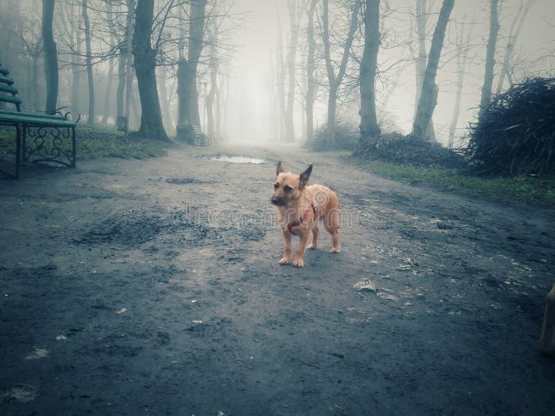 Cane nella nebbia immagini stock libere da diritti