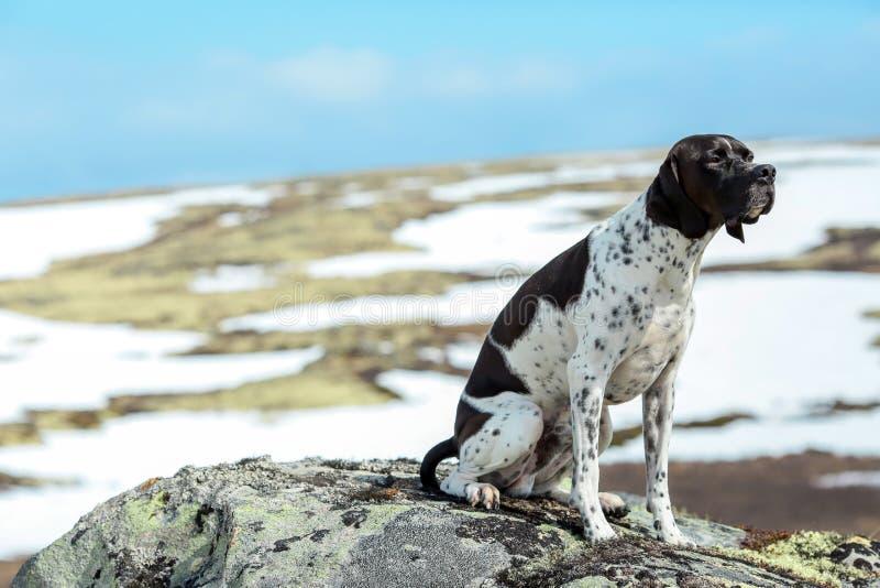 Cane nelle montagne fotografie stock libere da diritti