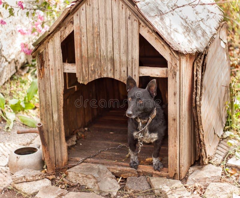 Cane nero in casa di legno fotografia stock