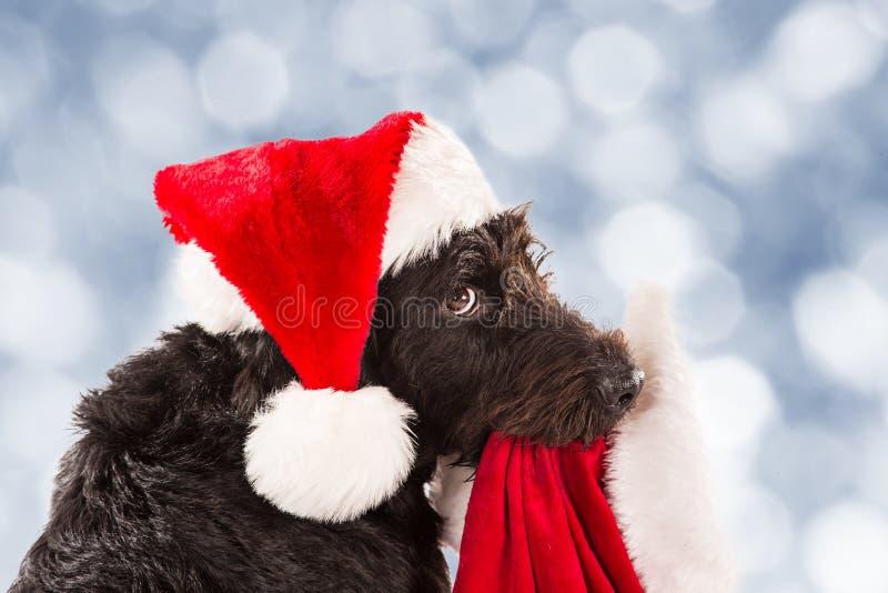 Cane nero con il cappuccio e la borsa di Santa fotografia stock libera da diritti