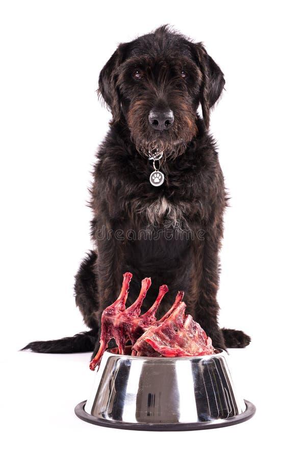 Cane nero con la ciotola piena di carne cruda isolata su fondo bianco fotografia stock libera da diritti