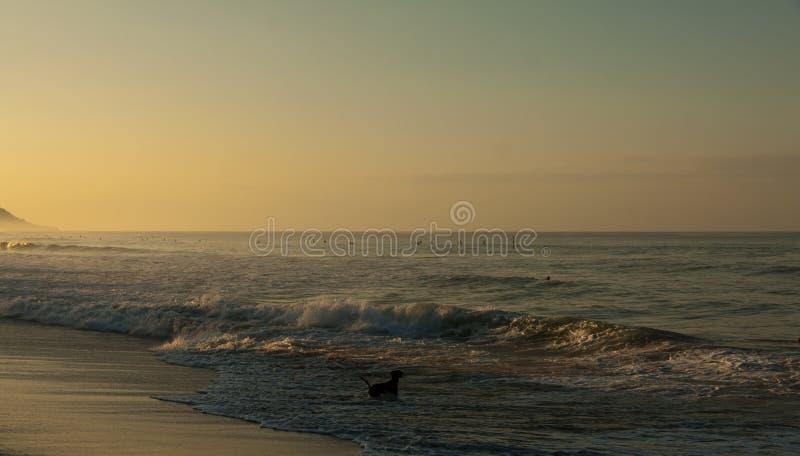 Cane nero sulla spiaggia al mare alla luce di sera fotografia stock libera da diritti