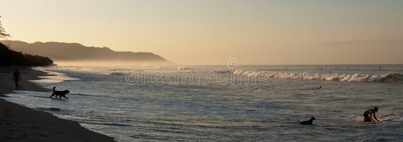 Cane nero sulla spiaggia al mare alla luce di sera fotografia stock