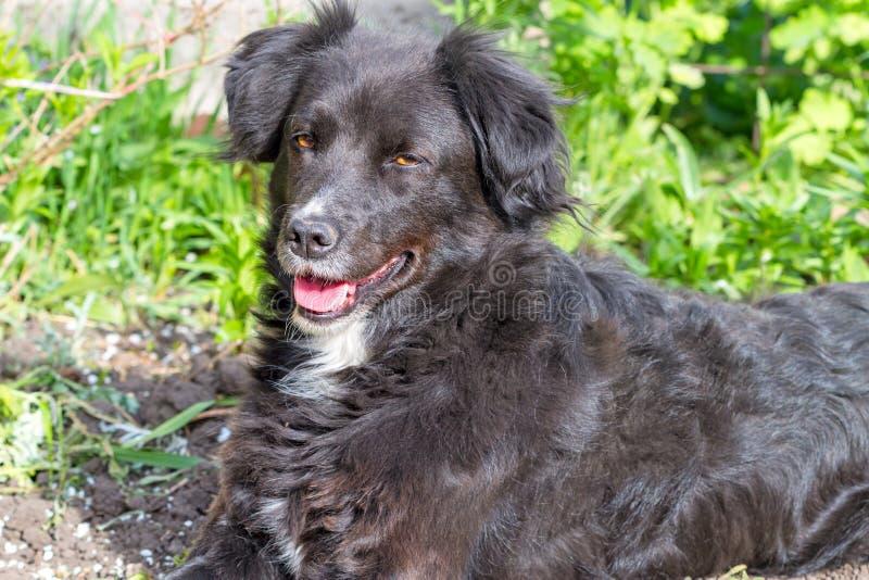 Cane nero un giorno soleggiato immagini stock
