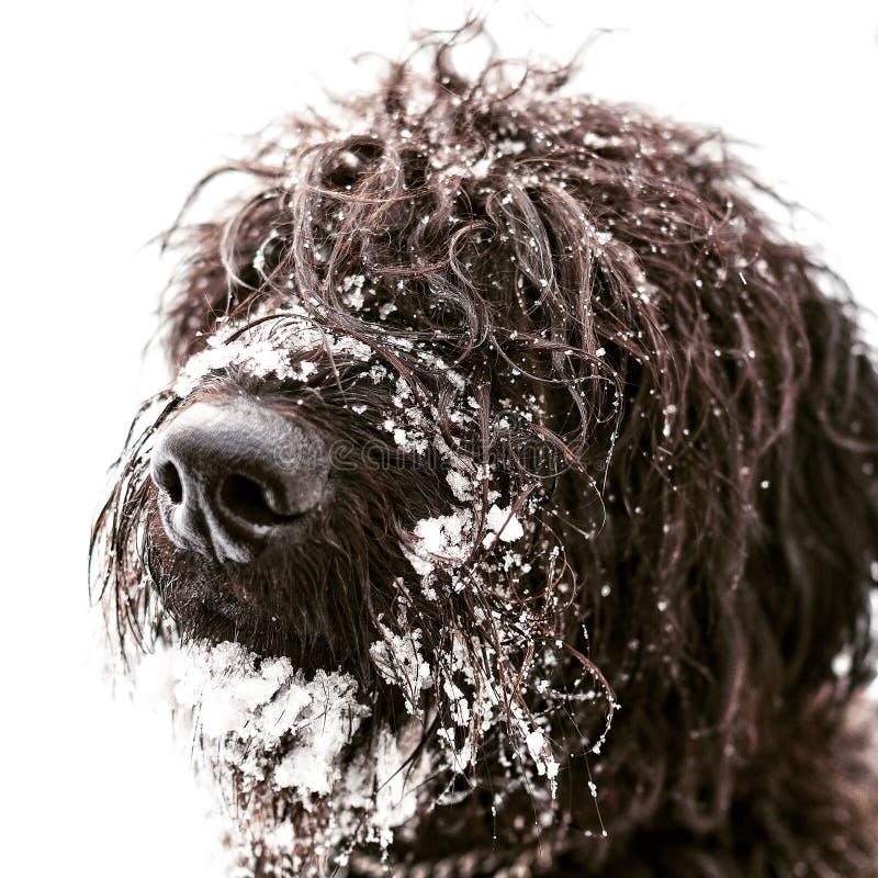 Cane in neve fotografia stock