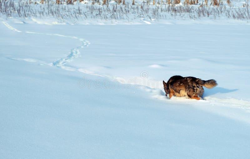 Cane in neve immagini stock libere da diritti
