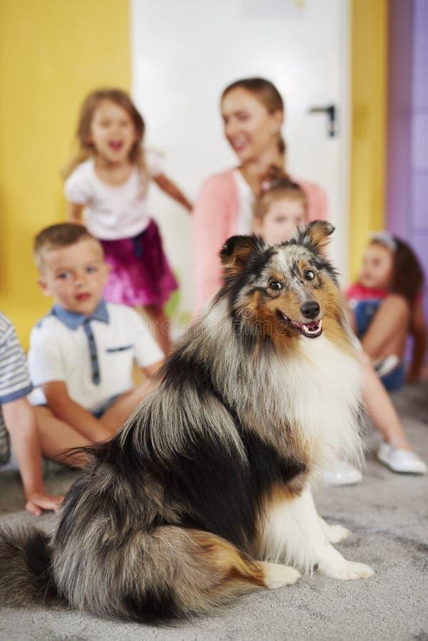 Cane pastore di Shetland e gruppo di bambini fotografia stock libera da diritti