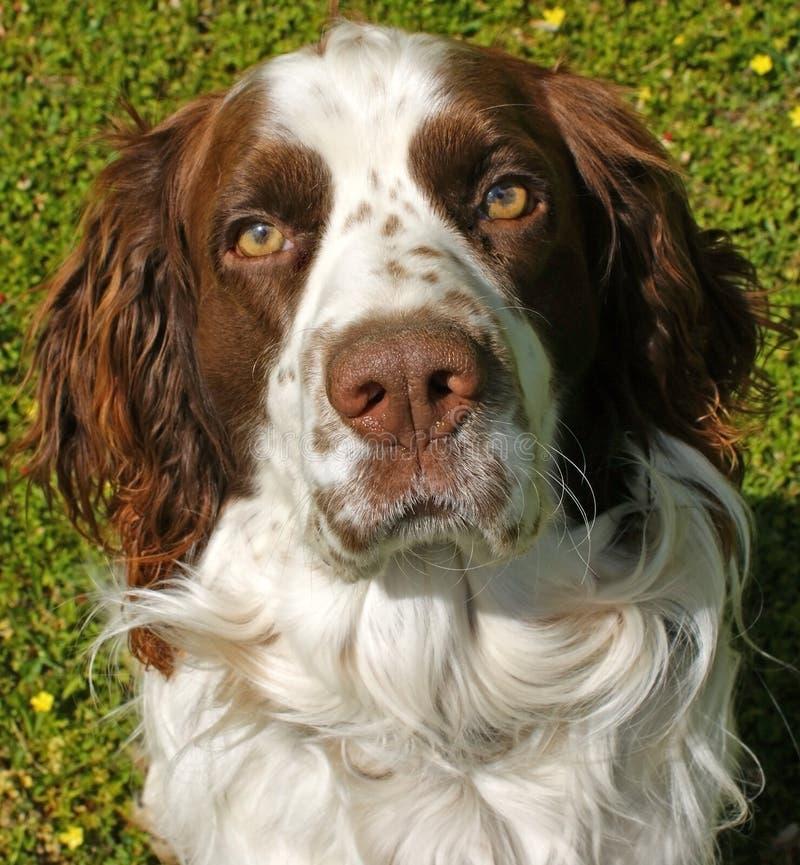 Cane perso fotografia stock libera da diritti