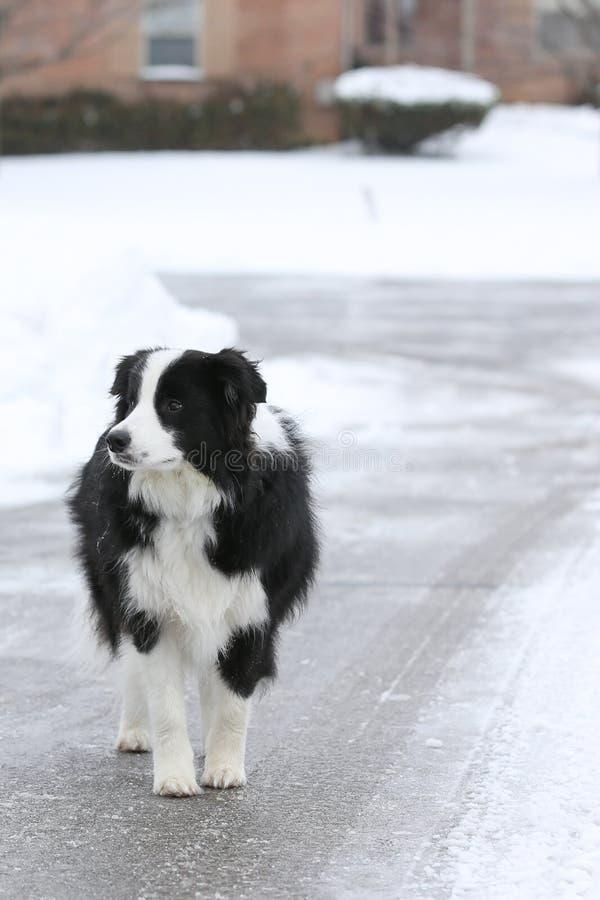 Cane perso nella via immagine stock libera da diritti