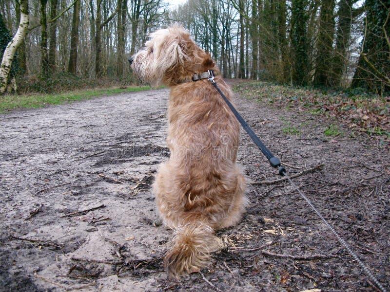 Cane in più forrest fotografie stock libere da diritti