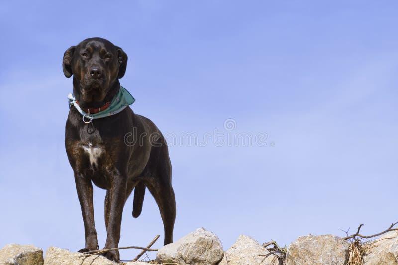 Cane piacevole fotografia stock
