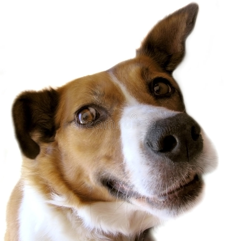 Cane piacevole fotografie stock libere da diritti