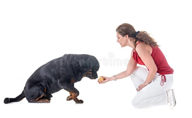 Cane, proprietario ed obbedienza immagine stock