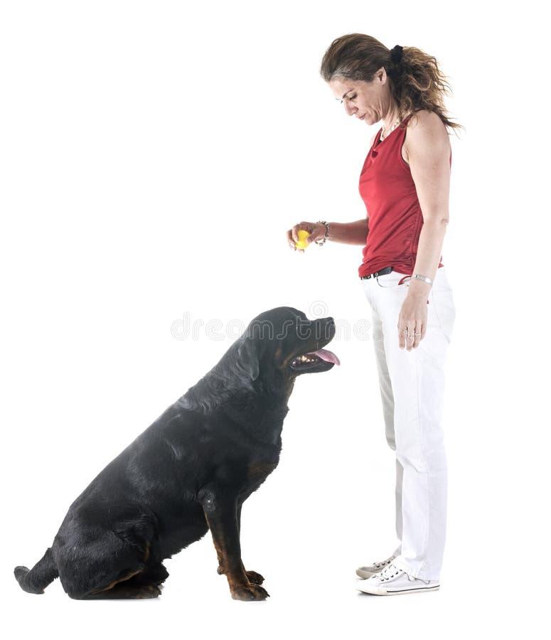 Cane, proprietario ed obbedienza immagini stock