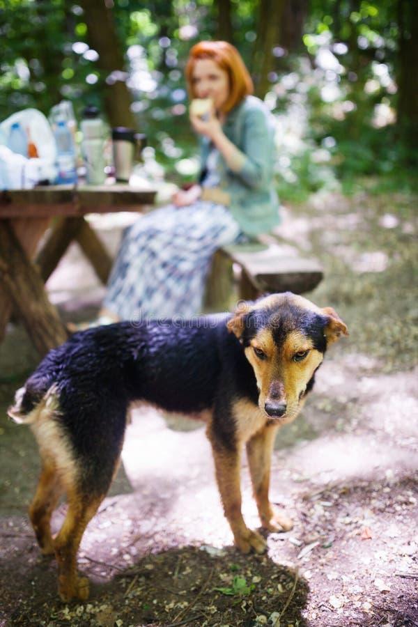 Cane randagio affamato fotografie stock libere da diritti