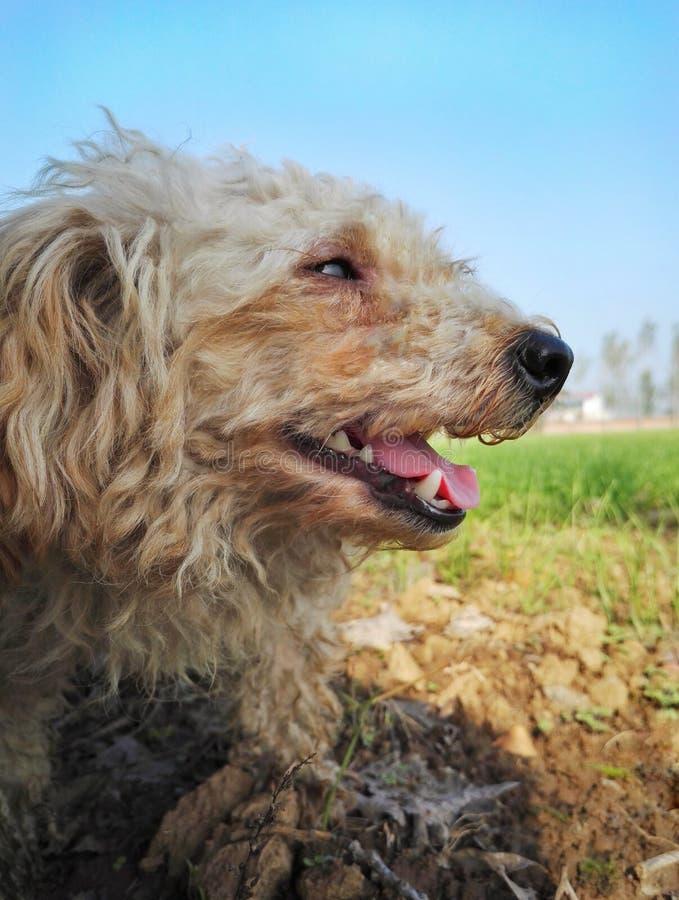 Cane randagio felice 3 fotografia stock libera da diritti