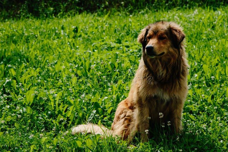 Cane randagio in un piccolo villaggio fotografie stock