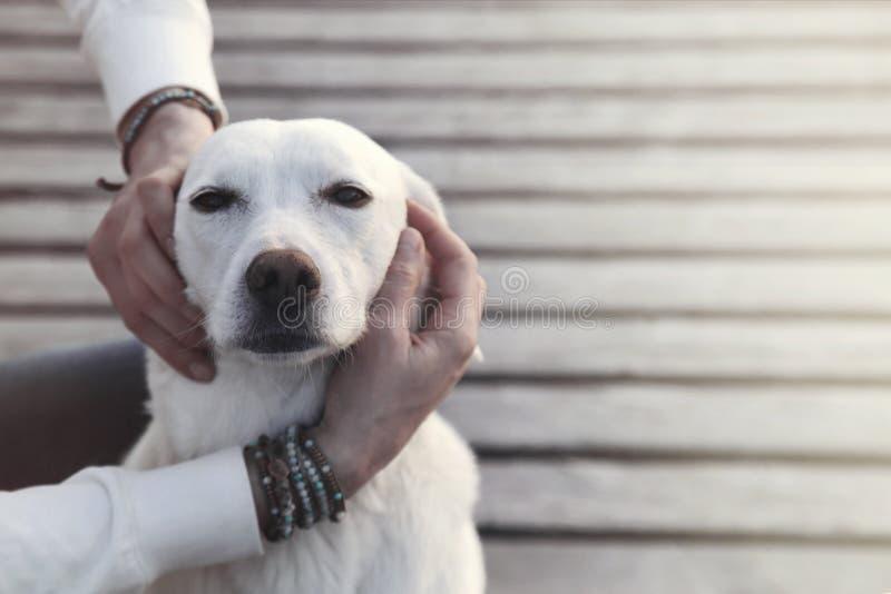 Cane rapito nell'abbraccio del suo proprietario fotografie stock
