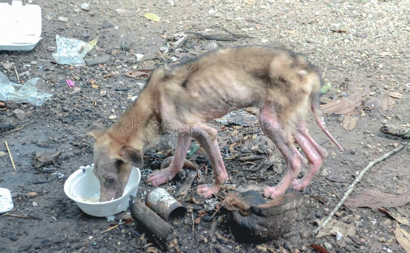 Cane rognoso che mangia alimento dalla ciotola di plastica fotografia stock