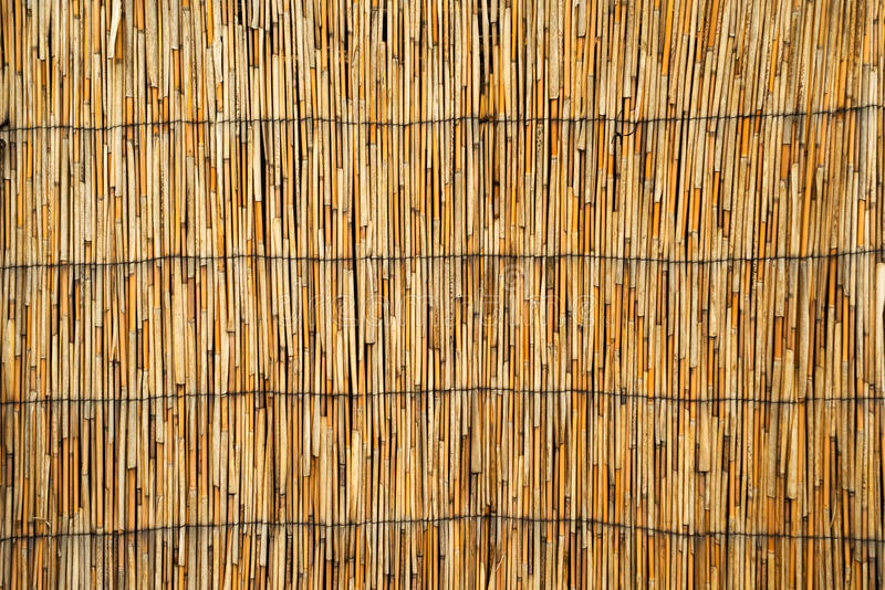 Cane roof texture. High res image of dry reed royalty free stock images