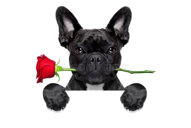 Cane rosa dei biglietti di S. Valentino fotografia stock libera da diritti