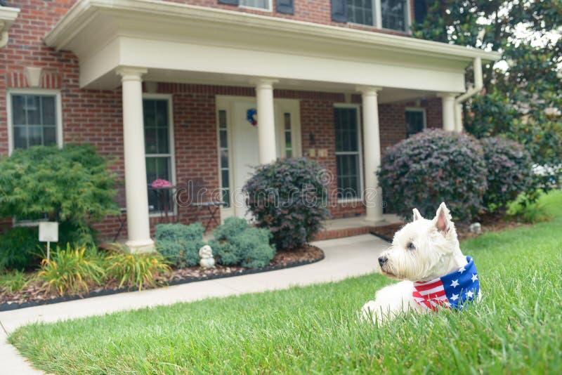 Cane in sciarpa della bandiera americana sulla strada privata della casa di lusso immagine stock libera da diritti