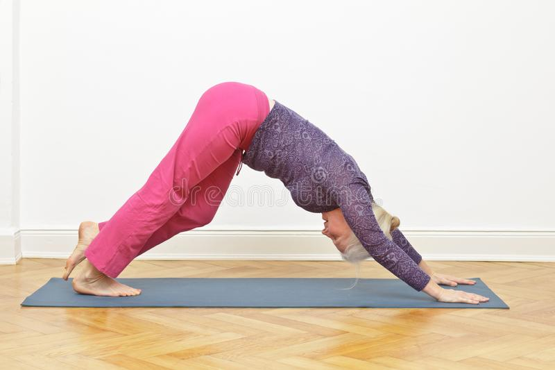 Cane senior di esercizio di yoga della donna immagine stock