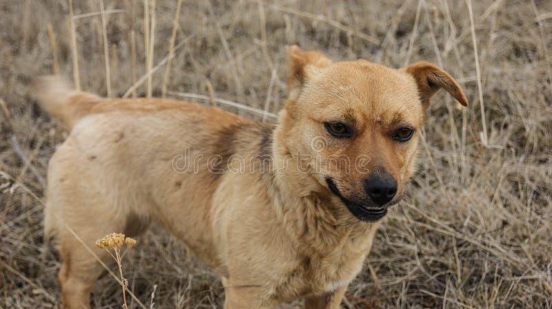Cane senza tetto fotografie stock