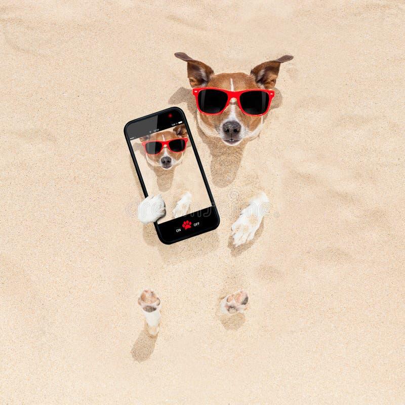Cane sepolto nel selfie della sabbia immagine stock libera da diritti