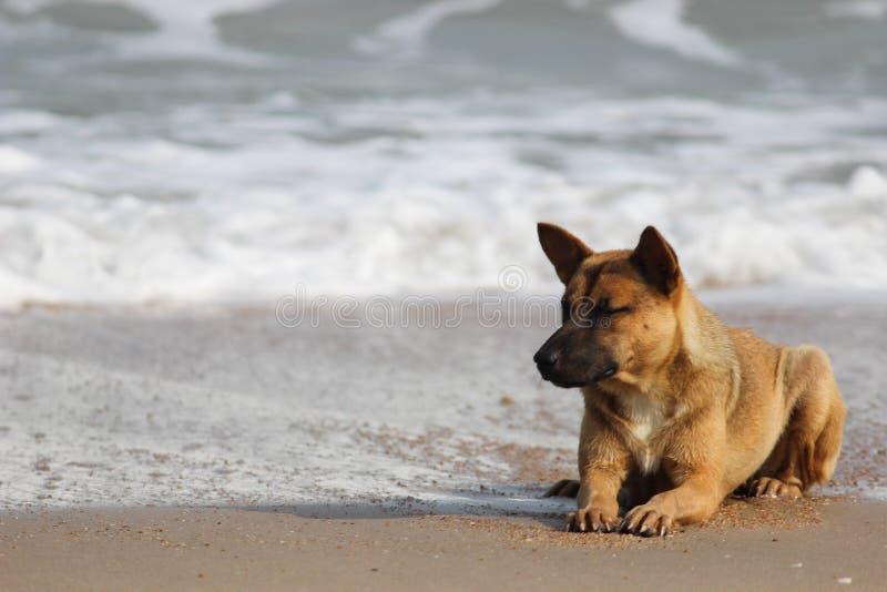 Cane solitario fotografie stock libere da diritti