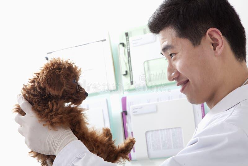 Cane sorridente e di tenuta veterinario in ufficio fotografia stock