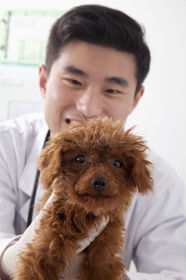 Cane sorridente e di tenuta veterinario in ufficio fotografie stock libere da diritti