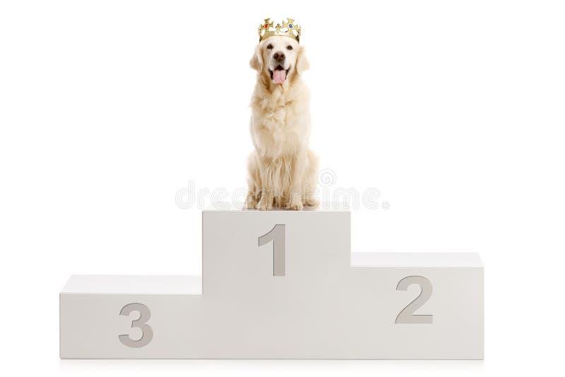 Cane su un supporto del ` s del vincitore fotografie stock libere da diritti