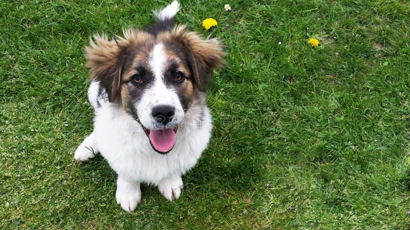 Cane sull'erba fotografia stock libera da diritti