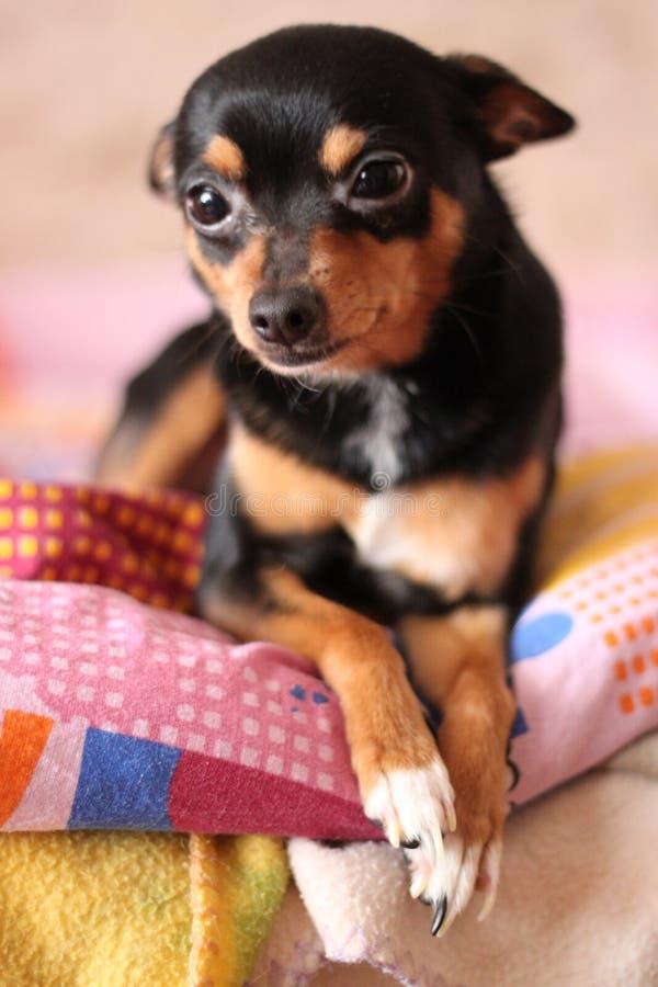 Cane sulla base fotografie stock libere da diritti