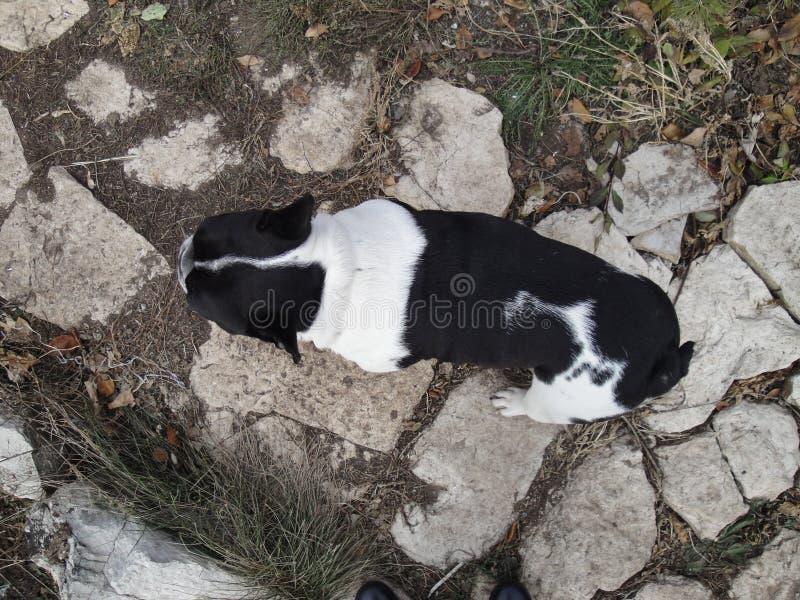 Cane sulla camminata immagine stock libera da diritti