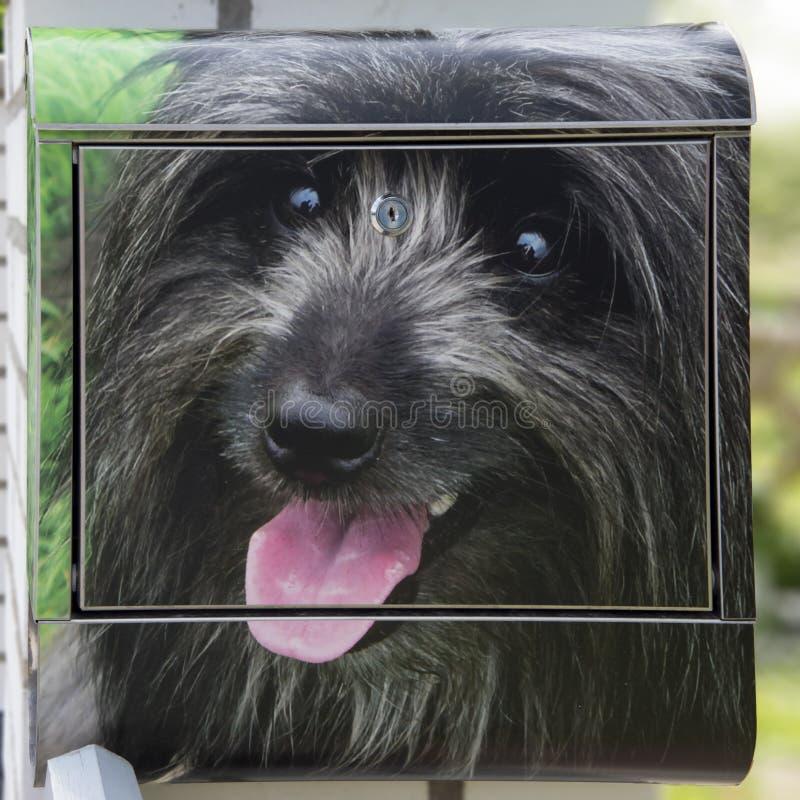 Cane sulla cassetta delle lettere fotografia stock libera da diritti