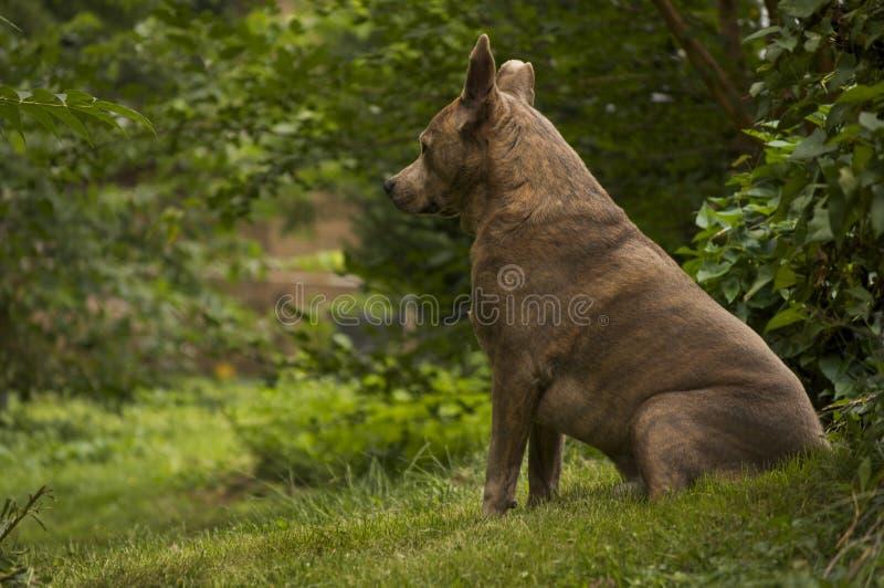 Cane sulla collina immagine stock libera da diritti