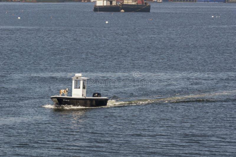 Cane sulla prua della barca pratica immagine stock