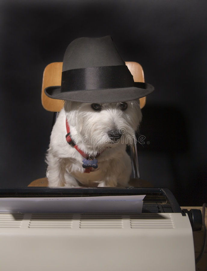 Cane sulla scadenza immagini stock libere da diritti
