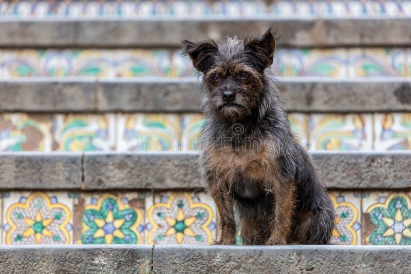 Cane sulla scala di Santa Maria del Monte fotografia stock